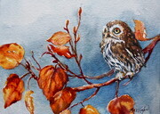 Autumn Gold Pygmy Owl