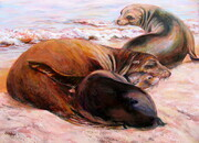 Basking Sea Lions