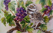 Burrowing Owl in the Vineyard