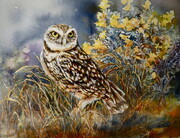 burrowing Owl With Rabbit Brush