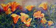 California Poppies- Glorious Gold