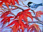 Chickadee on Maple