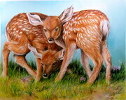 Fawn Twins