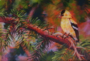 Goldfinch on Fir Tree