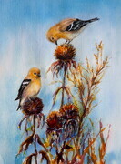 Goldfinches And Echinacea