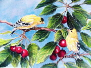 Golfinches and Cherries