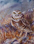 Grasslands - Burrowing Owl
