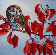 Nothern Pygmy Owl on Autumn Dogwood