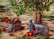 Okanagan Apple Harvest
