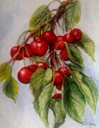 Okanagan Cherries