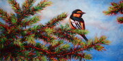 Oriole on Fir Tree