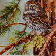 Pine Perch Pygmy Owl