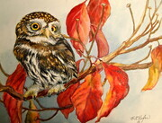 Pygmy Owl on Autumn Dogwood