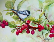Spring Perch Chickadee