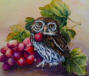 Vineyard Owl
